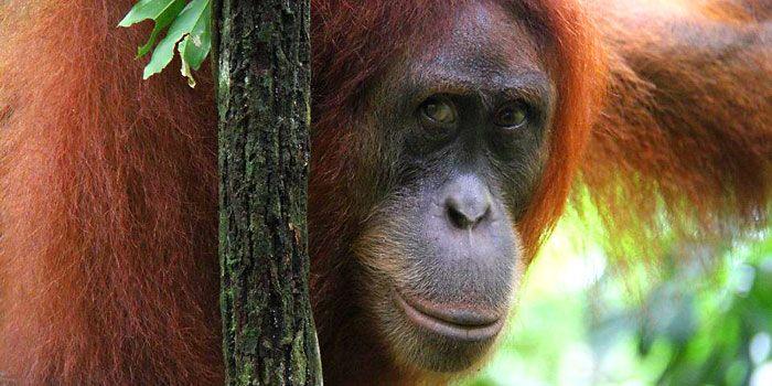 Sumatra Reise - Bukit Lawang - Toba - Tangkahan - Sumatra EcoTravel