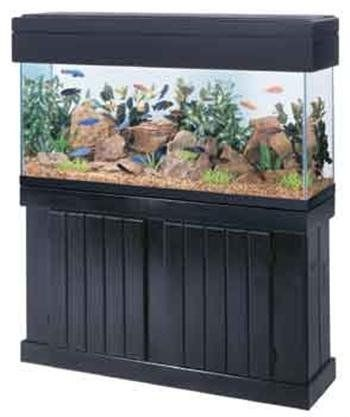 Home aquariums and Fish tanks offer a soothing force when someone is very upset or angry, especially due to Alzheimer's and dementia.