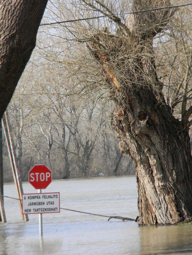 Tiszacsege - árvíz