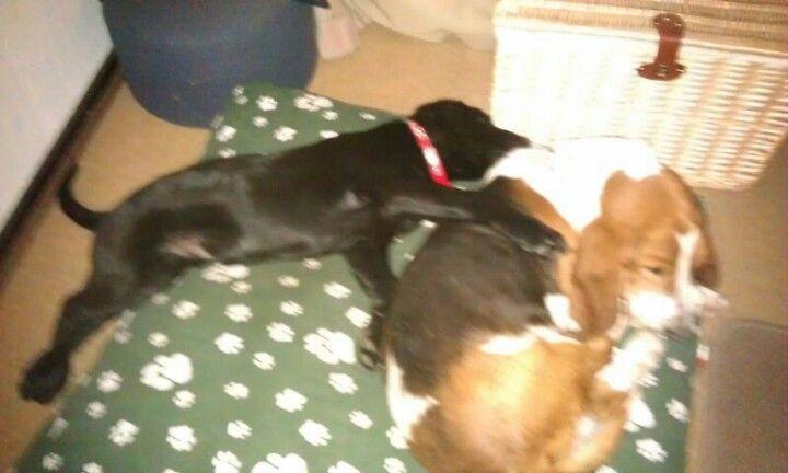 Koda bonding with his 'older brother'