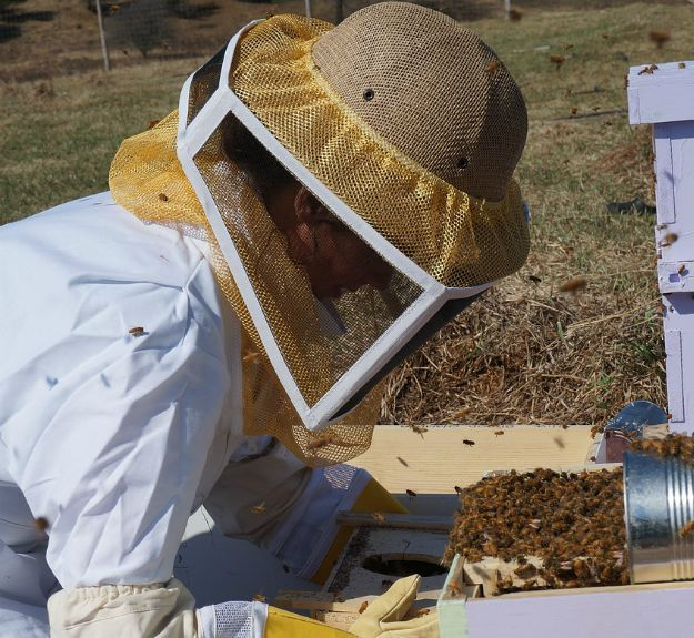 Purchase protective gear | The Survivalist's Guide to Raising Honey Bees