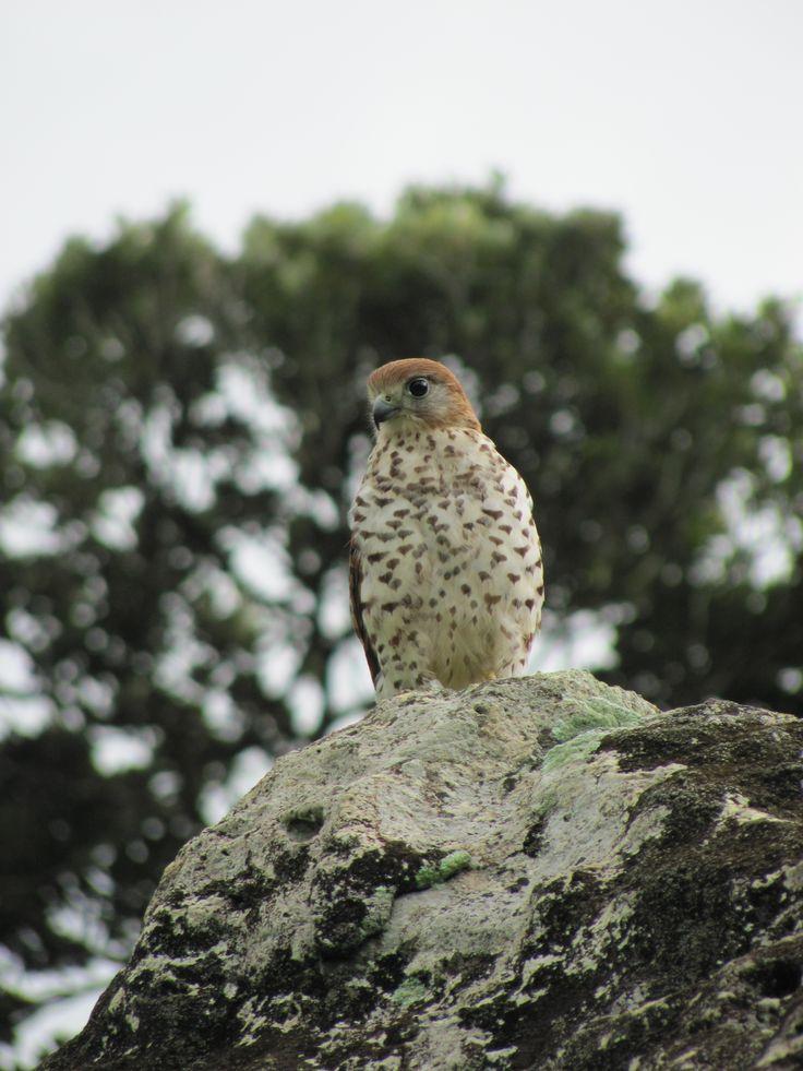Gallery Vall 233 E De Ferney Wildlife In Mauritius