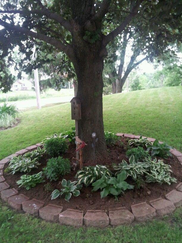 Hosta bed under tree