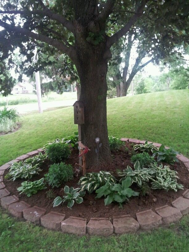 Landscaping Under Elm Trees : About landscape around trees on landscaping