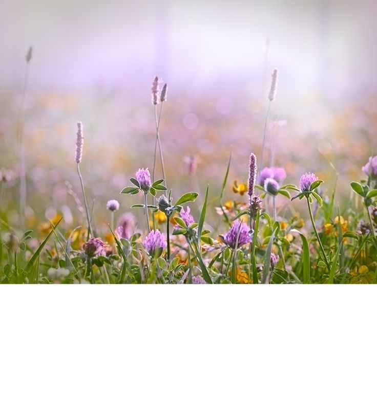 Plocka sju olika typer av blommor och lägg dem under kudden på midsommarnatten för att drömma om din framtida kärlek!