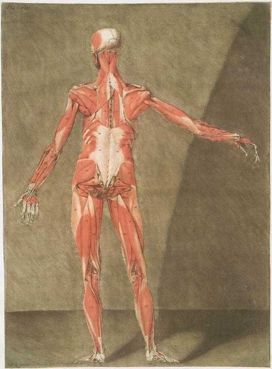 les 13 meilleures images du tableau gravures anatomie humaine sur pinterest anatomie humaine. Black Bedroom Furniture Sets. Home Design Ideas