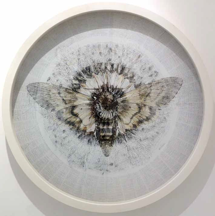 Australian Vogue Living. Exchange, the latest pop-up exhibition by independent arts platform Lots of Mopens tonight at Queen Street Gallery in Woollahra. Pictured isAcherontia atropos (anterior),digital print with pins and thread,by Cape Town mixed media artistBarbara Wildenboer.