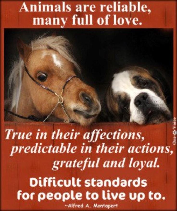 big and littleAnimal Lovers, Sooo True, Animal 3, Quotes Random Thoughts, Animal Welfare, So True, Animal Loyalty, Cans T Al Animal, Adorable Animal