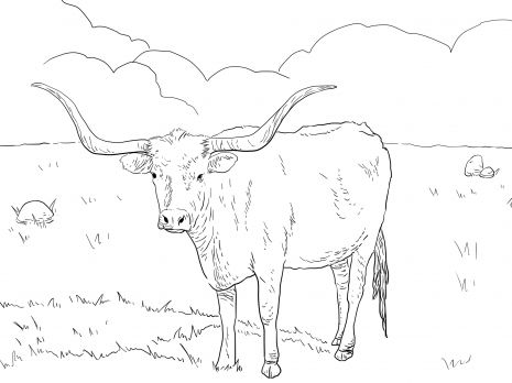 Texas Longhorn Cow Animal Colouring Pages Cow coloring