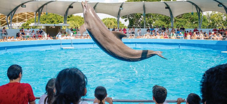 Long before there were theme parks in Orlando, the Miami Seaquarium thrilled tens of thousands of South Florida visitors each year. From baby boomers to preschoolers, generations of children have been awed by this marine-life park's whale and dolphin experiences. Visitors to this aquarium, loc