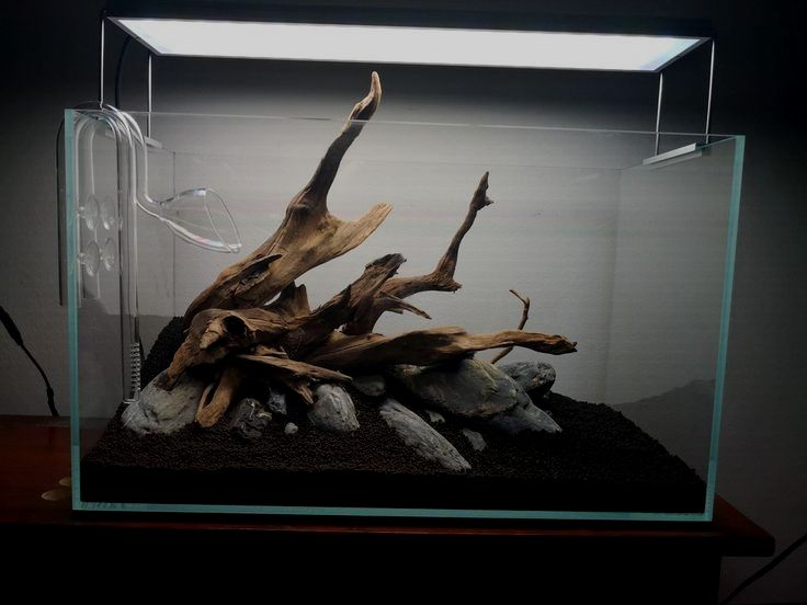 ef48801e30f4148c7d6667a3a0aa156d - How To Get Driftwood To Sink In Fish Tank