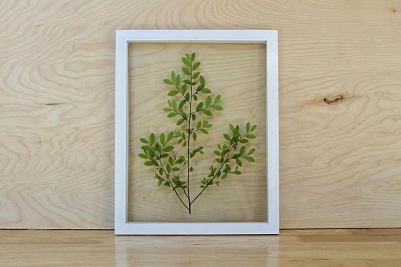 Modern Botanical Art Pressed Leaf Green Framed Plant