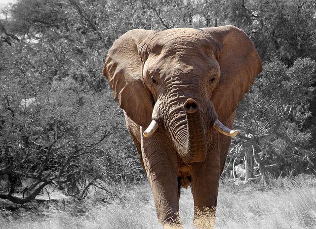 Free Photo: Elephant, Namibia, Africa - Free Image on Pixabay - 84186