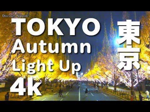[4K]東京の紅葉ライトアップ  Tokyo Autumn Leaves light up 神宮外苑、大田黒公園、六義園 東京観光 東京紅葉 - YouTube