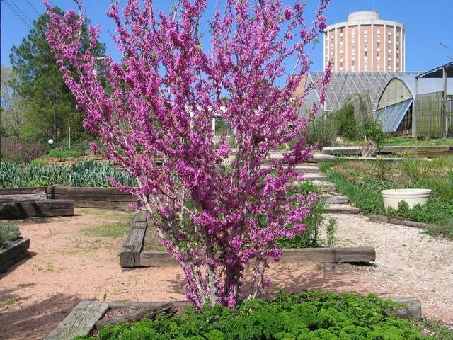 Landscape Garden Avondale : Best images about plants trees on gardens