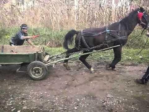 Probe de caii. Laslaul mic - YouTube