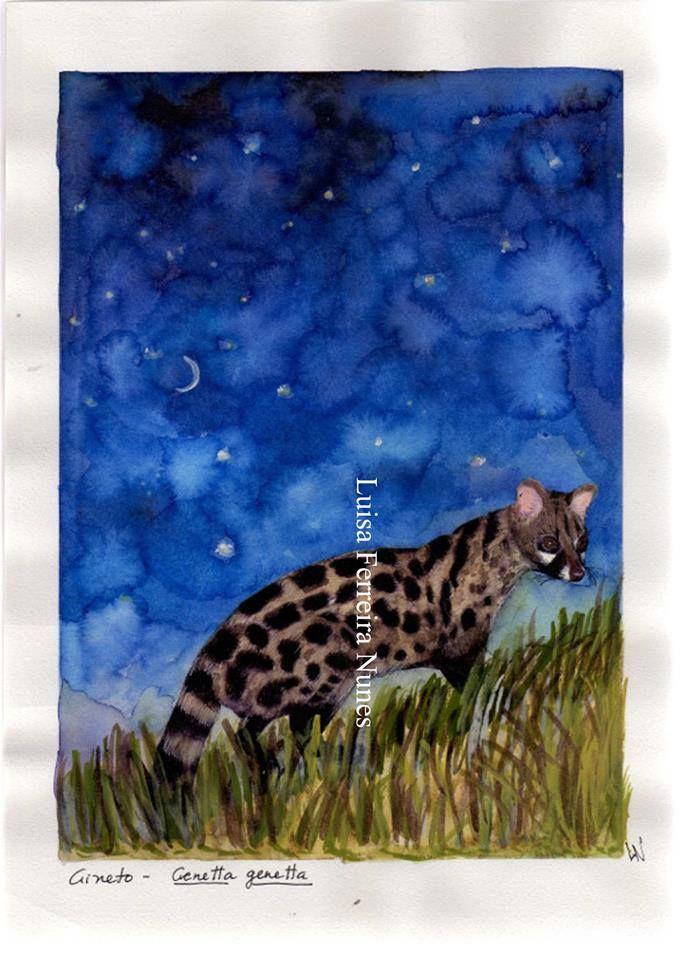 Gineta sob um céu deslumbrante!...  No Diário da Natureza 2014!... ;)