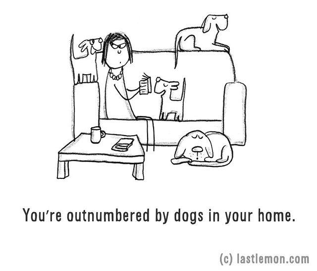 Kutyáid létszámbeli fölényben vannak a lakásodban