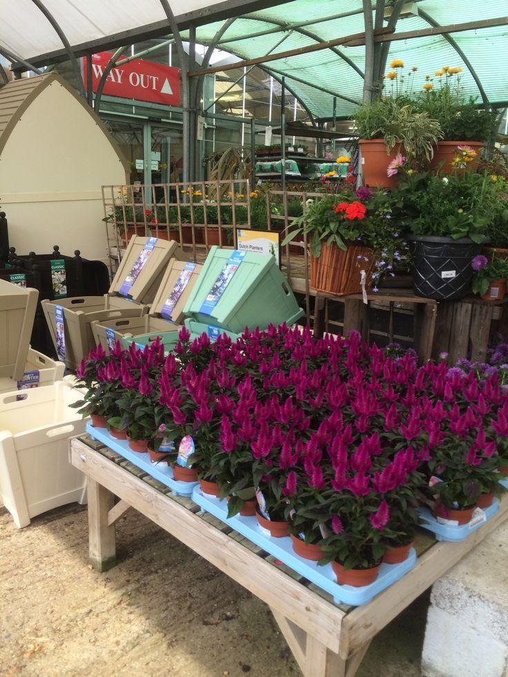 Hilliers Garden Centre - Plants - Lifestyle - Home - Garden - Layout - Landscape - Visual Merchandising - www.clearretailgroup.eu