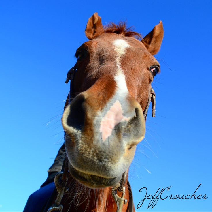 Such a beautiful horse! Jake. Avalon equestrian centre , Conception bay south Newfoundland