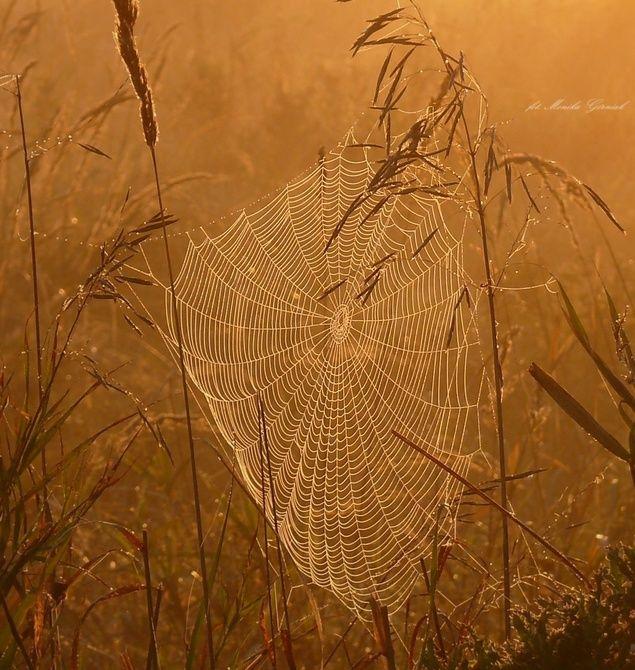 Szczypta pajęczej magii - Galeria: Monika Górniak - Galeria zdjęć DigitalCamera Polska - fotografie, zdjęcia