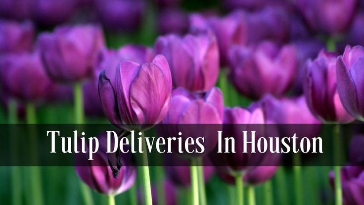 Flower Delivery Houston Texas | Pink Tulips for Delivery
