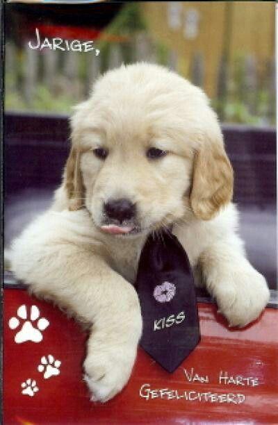 Gefeliciteerd Hond Kat Gefeliciteerd Hond Kat Pinterest I Love