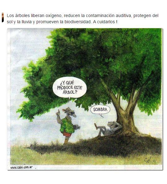 Los árboles liberan oxígeno, reducen la contaminación auditiva, protegen del sol y la lluvia y promueven la biodiversidad. A cuidarlos !