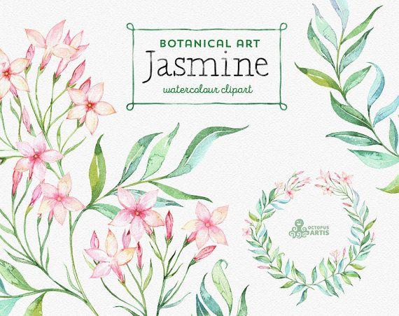 Jasmine. Botanical art. Floral Elements wreath por OctopusArtis