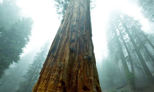 Importance of Old Growth Forests: Carbon Capture Potential Grows With Age