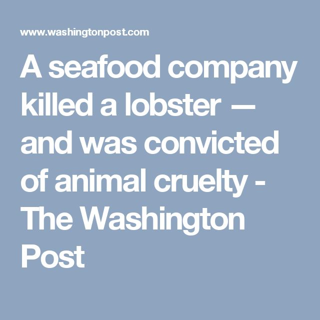 A seafood company killed a lobster — and was convicted of animal cruelty - The Washington Post