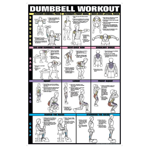 Chart Series II Dumbell Exercises Shoulder Back Leg