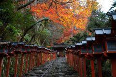 京都紅葉情報 そうだ 京都、行こう。~京都への旅行、観光スポットで京都遊び~