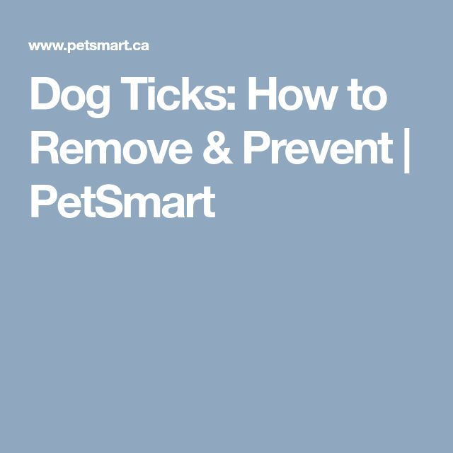 Dog Ticks: How to Remove & Prevent | PetSmart