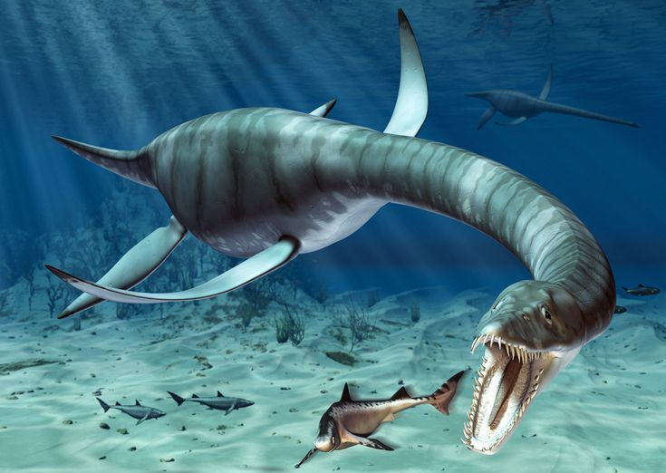 занимает динозавры водоплавающие картинки с названиями печное
