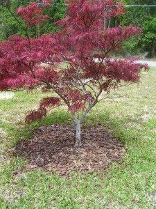 http://stillmanstreeservice.com/blog/pruning-improves-plant-health?utm_content=buffer7d847&utm_medium=social&utm_source=pinterest.com&utm_campaign=buffer  #BradentonTreeServices  #SarasotaTreeServices