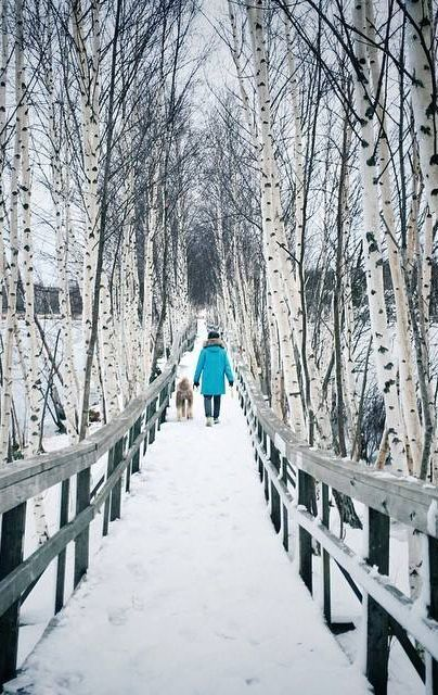 A winter wonderland fit for life's magical moments. | Sackville Waterfowl Park, New Brunswick Canada | Photo: @leifography / Instagram. http://www.tourismnewbrunswick.ca/Products/S/SackvilleWaterfowlPark.aspx?utm_campaign=tnb+winter+2015&utm_medium=owned&utm_source=pinterest