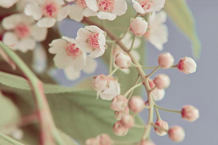 Gentle Little Flowers Photograph by Marfffa Art