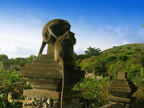 Uluwatu Temple Monkeys