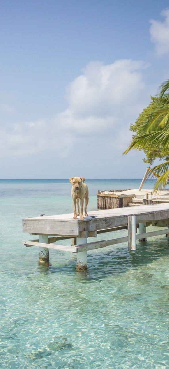Travel Belize | Reise Belize. Snorkeling and diving at its best! 11 Highlights…