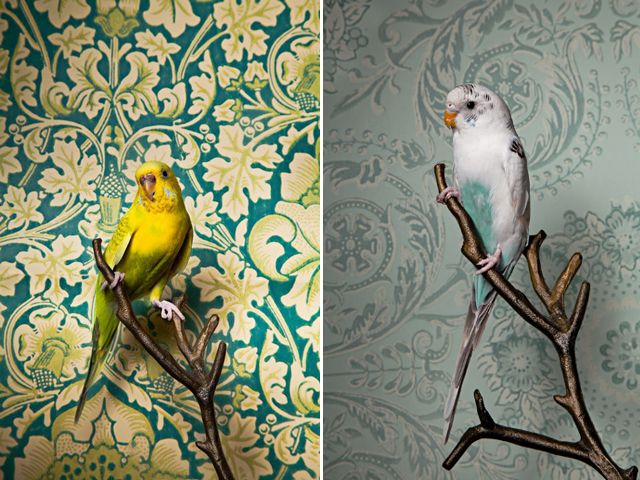 Birds Of A Feather, alive portrait series by Claire Rosen,is ridiculouslygood. The vintage wallpaper backdrops really accentuate and highlight the colors in each bird, which range from the common Parakeet to the exotic Hyacinth Macaw. The combinations are brilliant and simply happy.