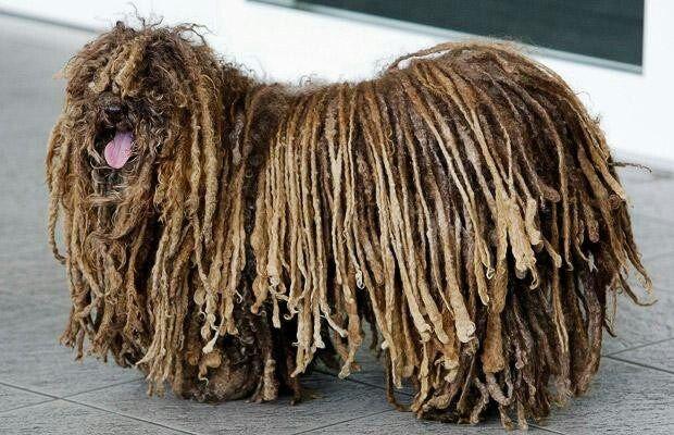 Weirdest Dog Breed You Ever Saw!
