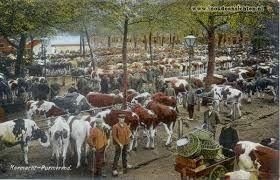 Oude koemarkt