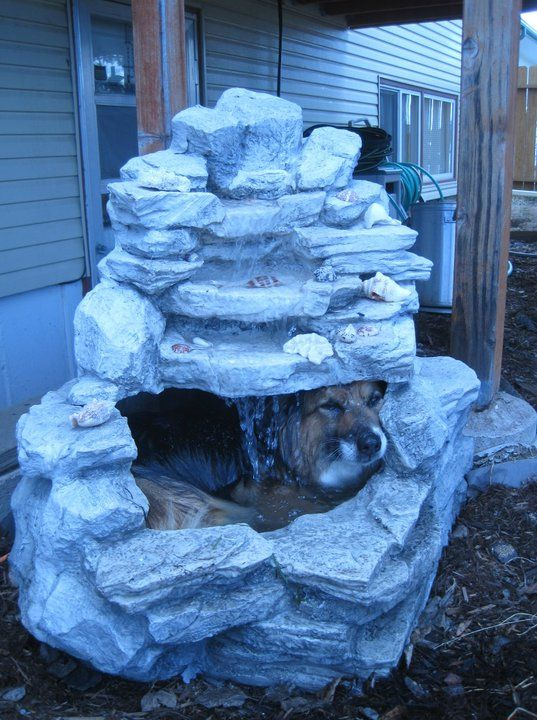 When my Corgi gets hot this is what she does. If I had had a fountain my Corgi would have done it too! She loved water!: Funny Captions, Dogs Day, Silly Dogs, Funny Pictures, Hot Day, Dogs Wash, Baby Bears, Summer Heat, Weights Loss
