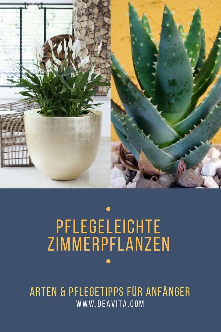 1010 besten house plants bilder auf pinterest garten pflanzen sukkulenten und balkongarten. Black Bedroom Furniture Sets. Home Design Ideas