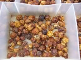 australian bush tomato -small pungent berry is collected in the central desert regions from a shrub related to the tomato family. Also called Desert Raisins.