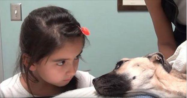 Sie starrt in die Augen eines sterbenden Hundes. 5 Sekunden später passiert ein Wunder.