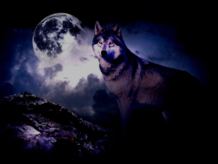 wolf wallpapers ndash animal - photo #33