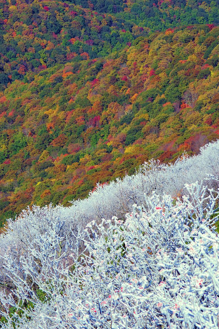 Early winter snow and rime ice on mountainside with fall color in the North Carolina mountains near Asheville
