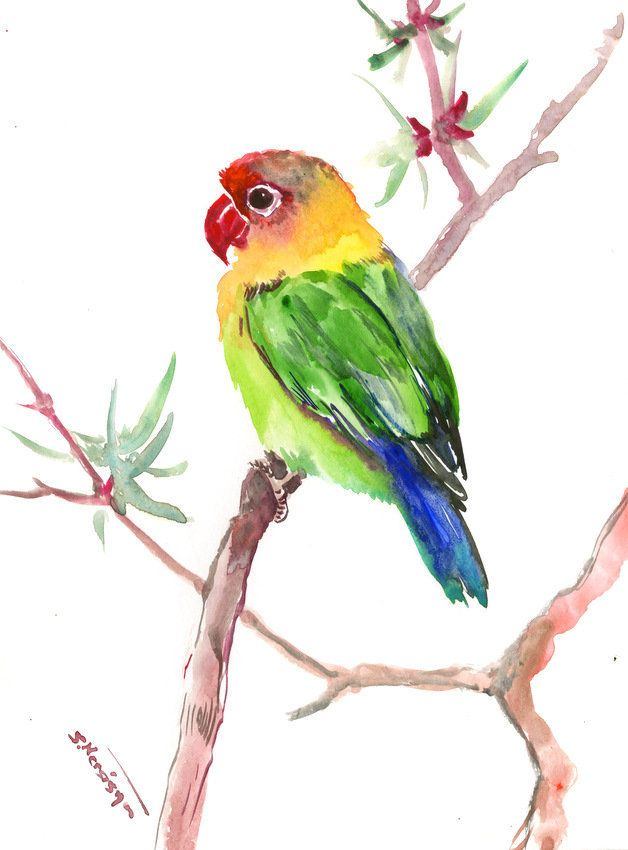 Lovebird Original Watercolor Painting 12 X 9 In Lovebird Lover